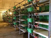ZUCAMI battery cages for 124.000 REARING